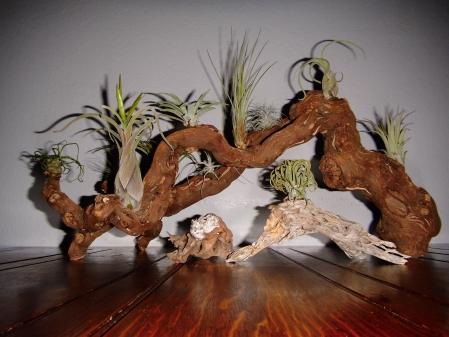 Exotische Pflanzen Wachsen Ohne Erde Mein Bad Zwischenahn
